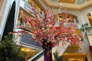 花の木 パラッツオ