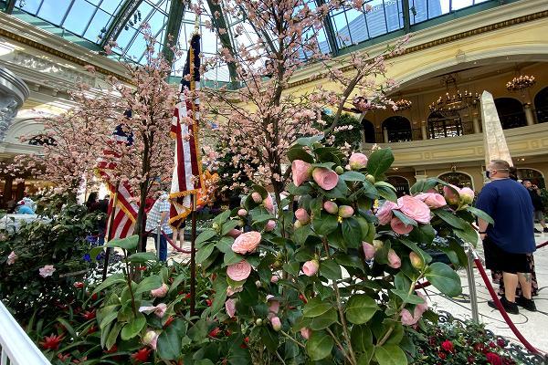 ワシントン桜祭り