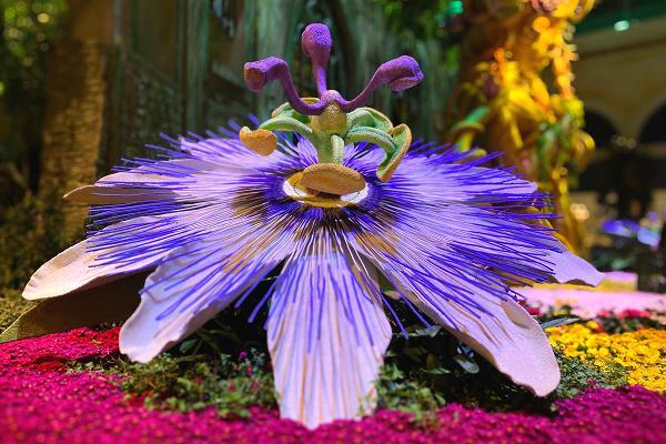 紫の大きな花
