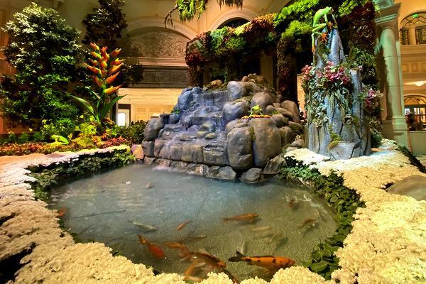 コイのいる池